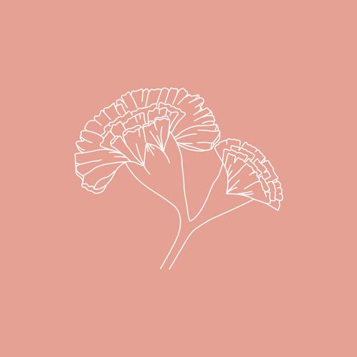 Geburtsblumen – Januar: Die Nelke