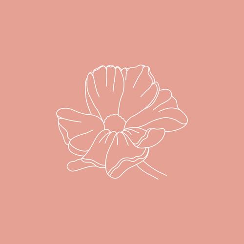 Geburtsblumen – Oktober: Die Cosmea