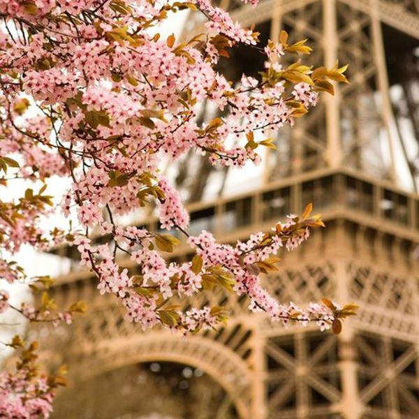Destination Summer: A Day In Paris