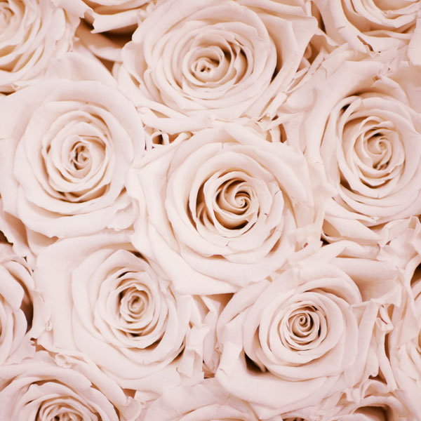 June Birth Flower: Rose
